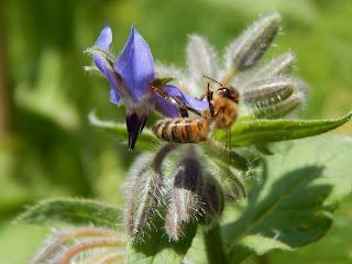 biovegan gärtnern