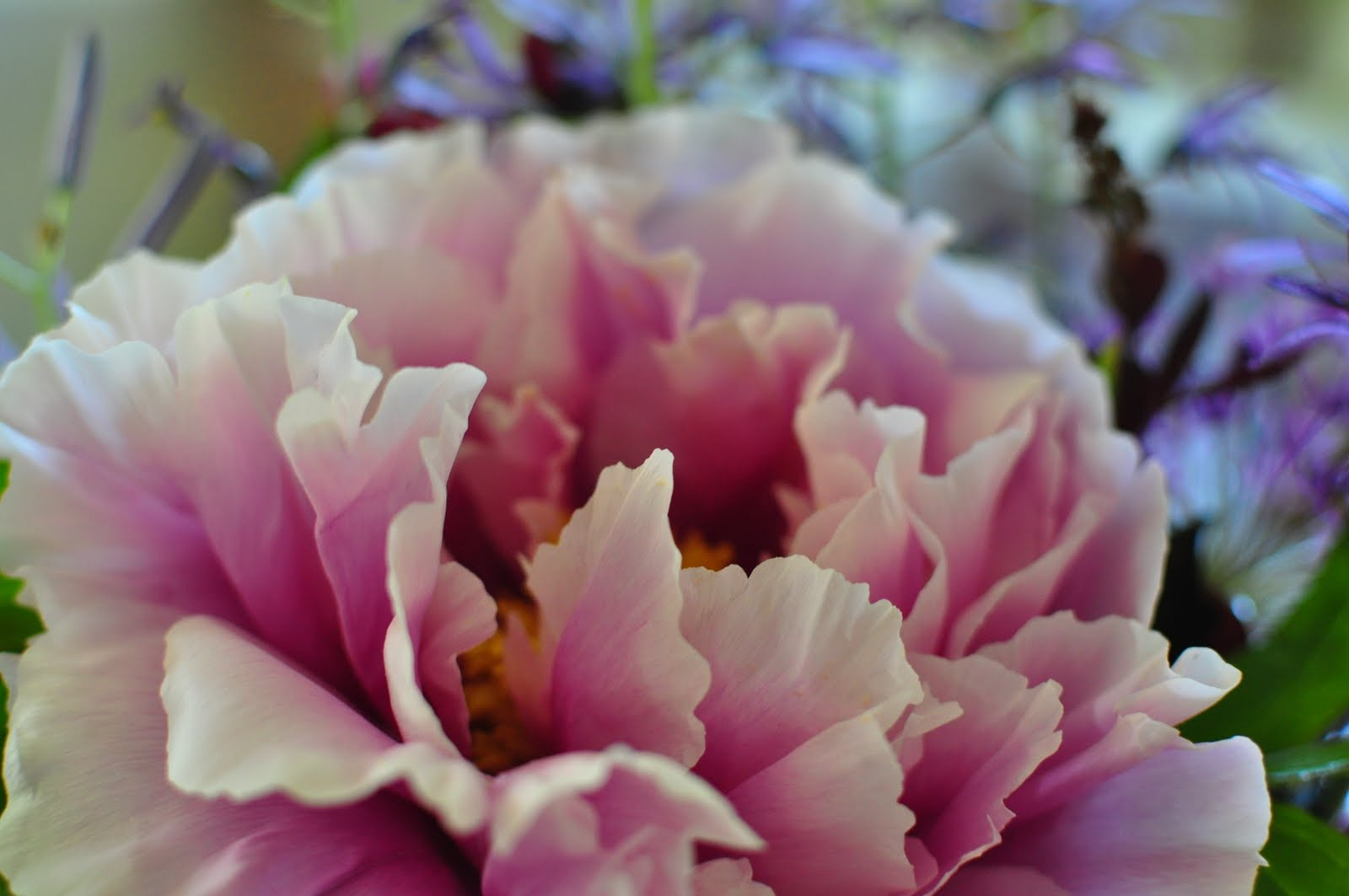How to Grow and Layer Tree Peonies at A Nest for All Seasons