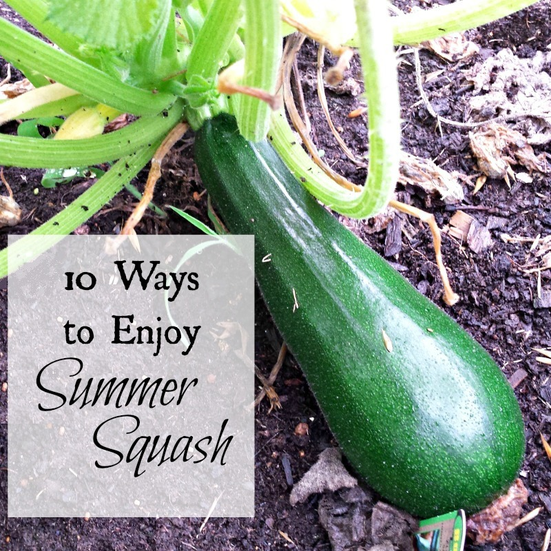 37 Ways To Savor Your Summer: 10 Ways To Enjoy Summer Squash