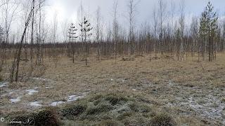 Kotojärvi Mäntsälä luonto ulkoilu
