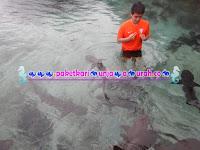 berenang bersama ikan hiu di karimunjawa
