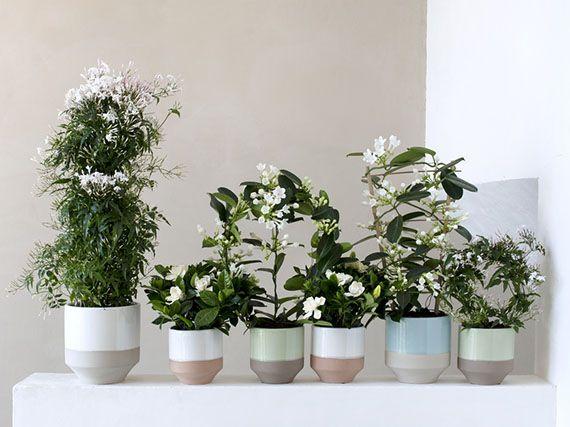 Fragancia De Flores Blancas Dentro De Casa Tienda Sopelana