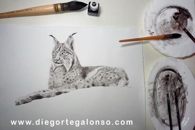 Señorío. Lince ibérico en tinta china. Diego Ortega Alonso.