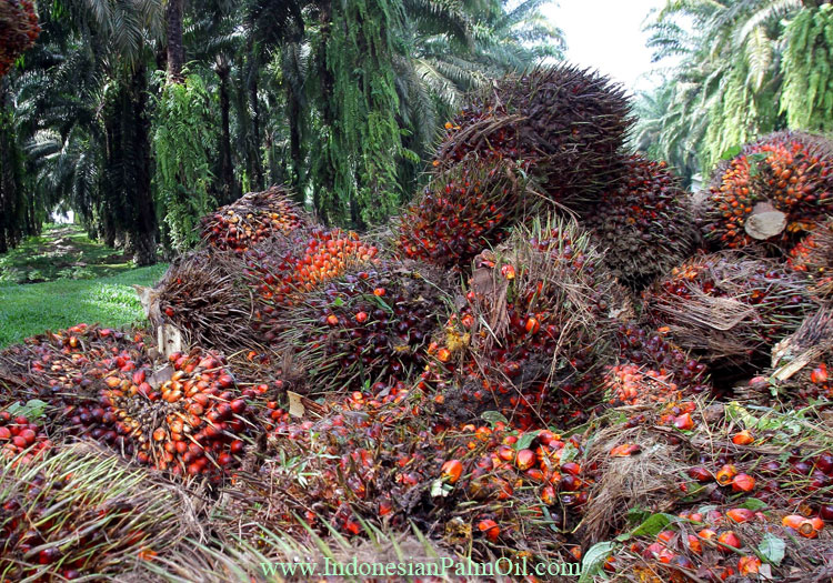 palm oil production on ramadhan