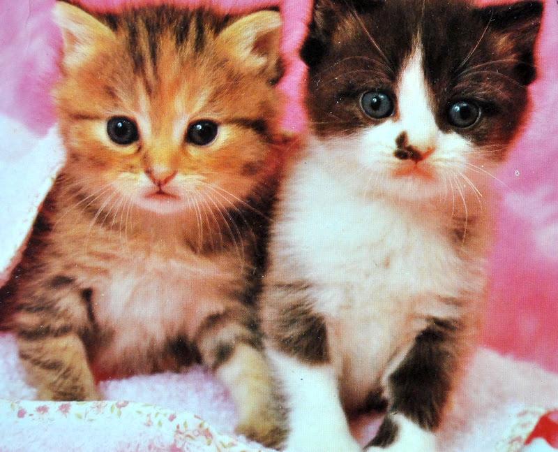 pocztówka z kotami