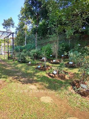kebun tanaman herbal