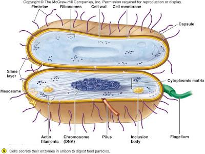 cells alive worksheet