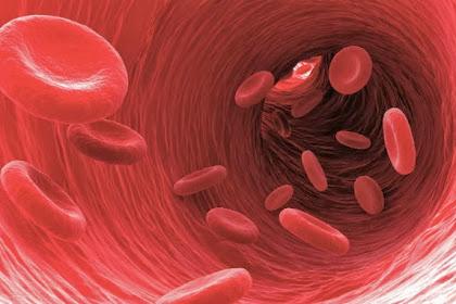 Apa Itu Kanker Darah? Kenali Gejala Awalnya yang Selalu Diabaikan