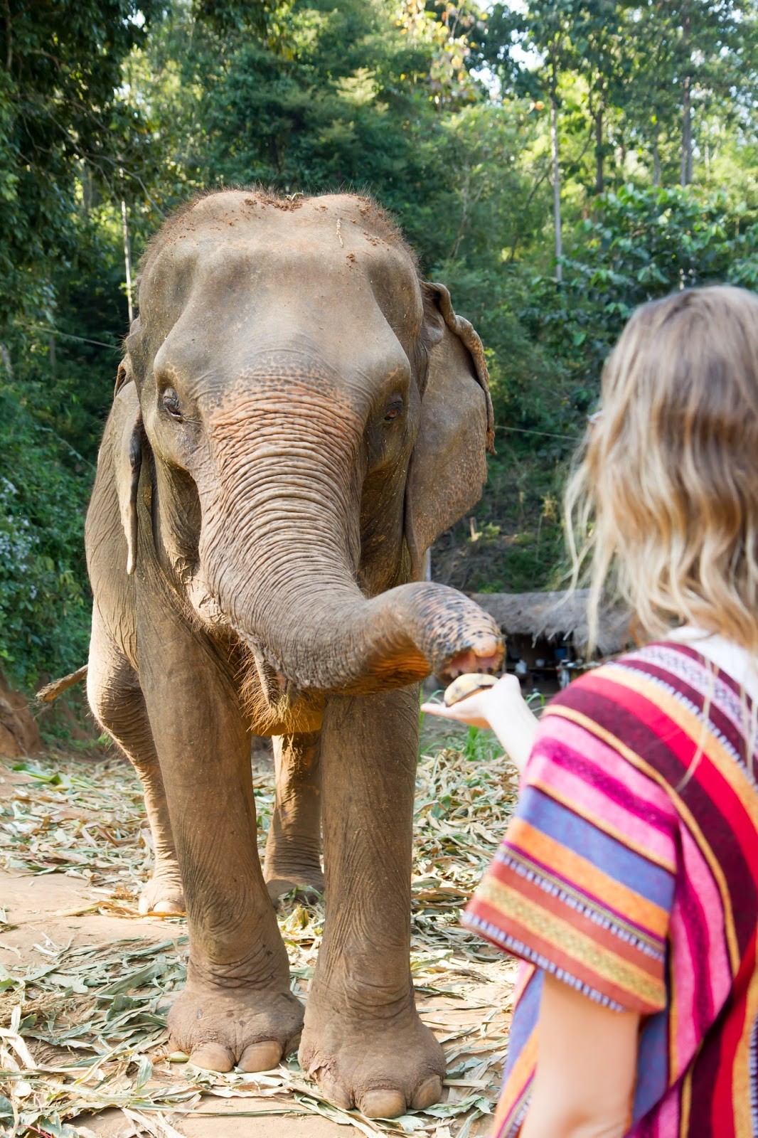 Elephant Jungle Sanctuary | Chiang Mai, Thailand