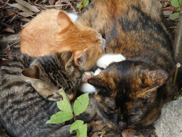 kawaii kittens pics