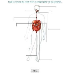 http://www.juntadeandalucia.es/averroes/~29701428/salud/ssvv/digestivo.htm