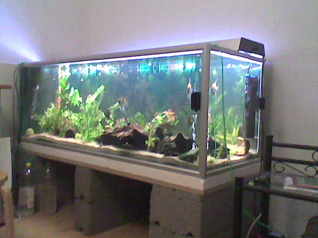 Beautiful styles of fish aquariums download photos for Fancy fish tanks