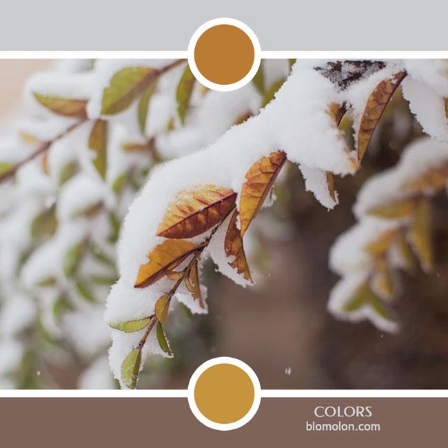 variedad_en_color_color_81