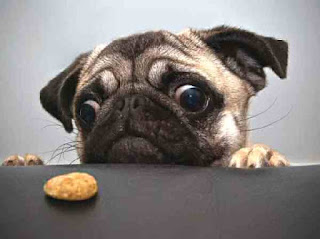 Dog has only one cookie