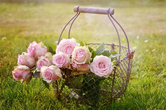 Pink Roses in Wire Basket in Grassy Field