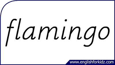 flamingo flashcard, single word