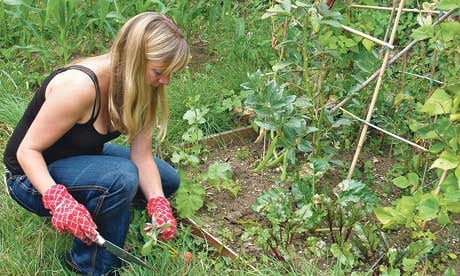 Growing your own fruit and vegetables in a garden you share can be rewarding – and can save you money.