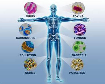 Gangguan dan Cara Mempertahankan Sistem Kekebalan Tubuh