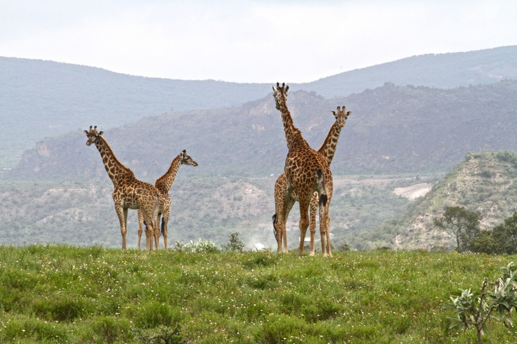 The Walking Safari – Hell's Gate National Park, Kenya
