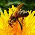 A Importância das Abelhas na Natureza