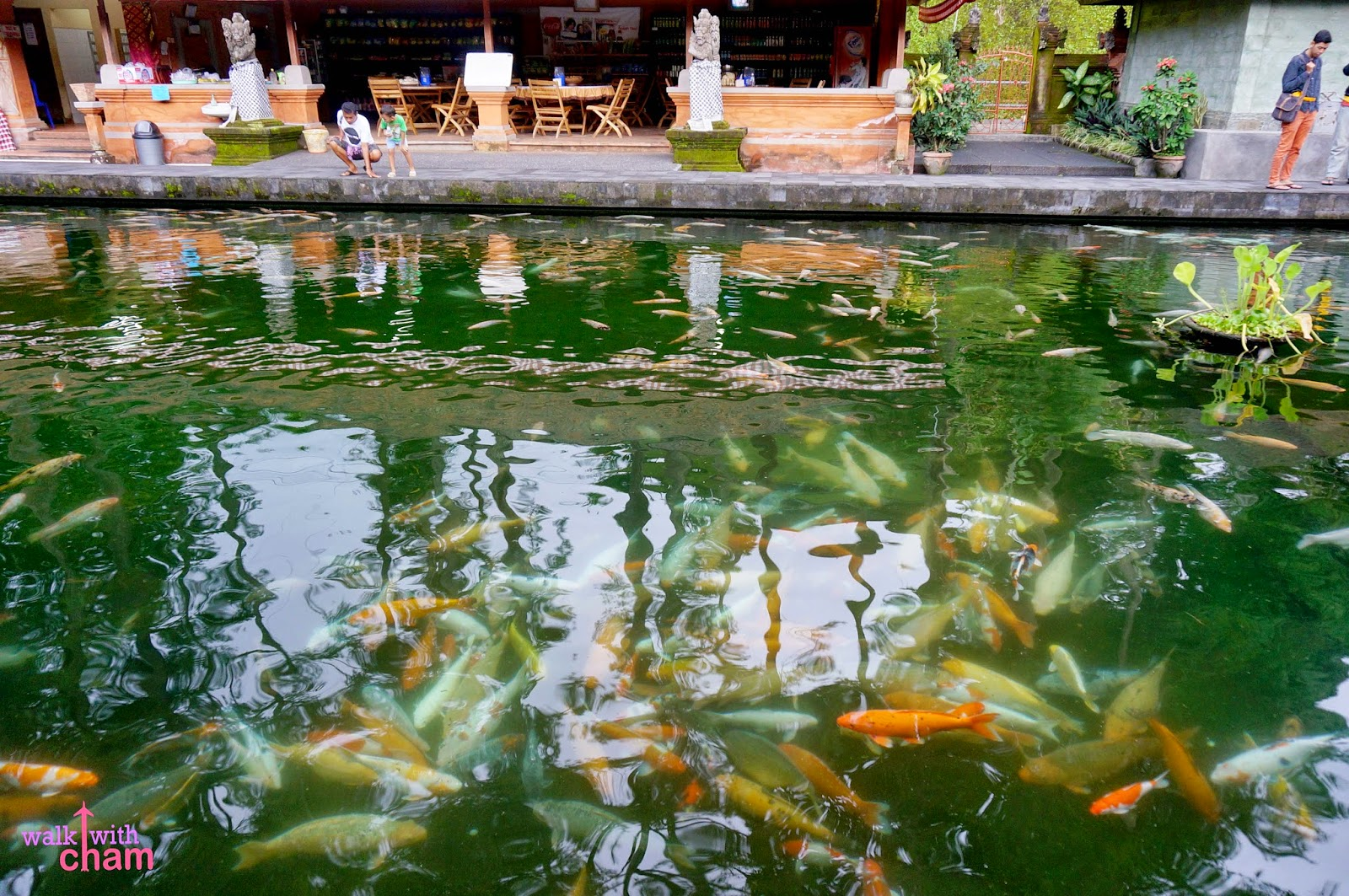 Walk with cham tirta empul temple bali indonesia for Koi pool opening times