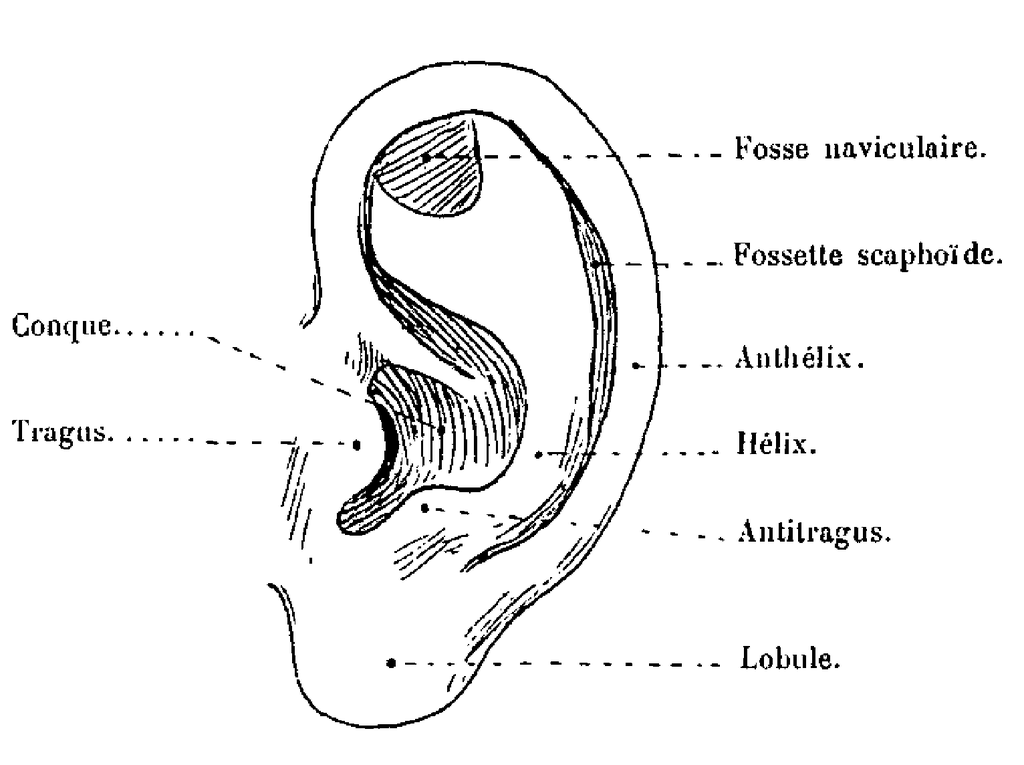 The Human Ear Structure And Function Healthy Life Xtra