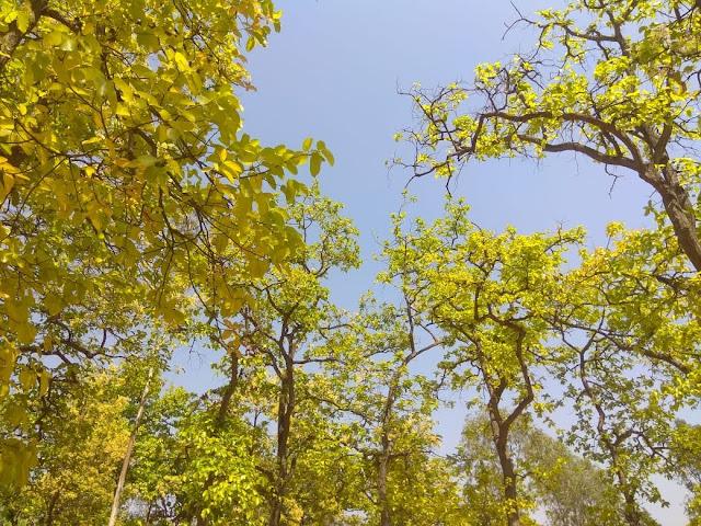 Natural Beauty In Santiniketan