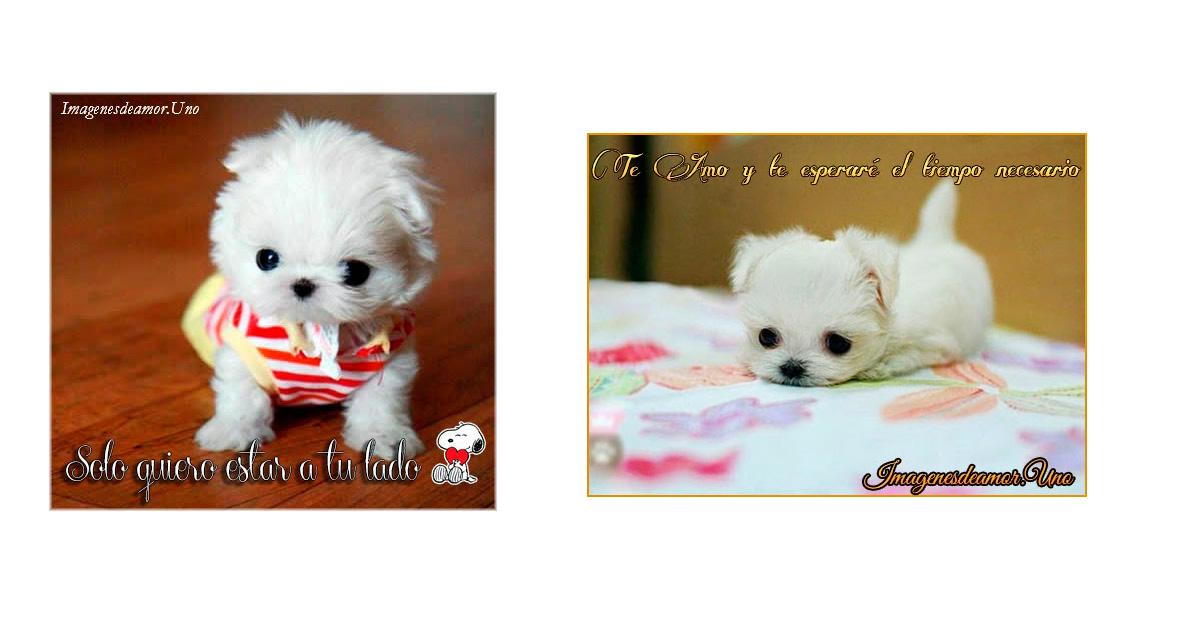 10 Imágenes tiernas de perritos con frases de amor. - ImágenesdeAmor ...
