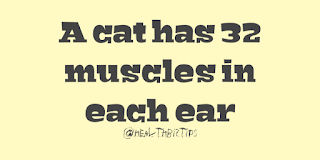 Health Facts & Tips @healthbiztips: A cat has 32 muscles in each ear.