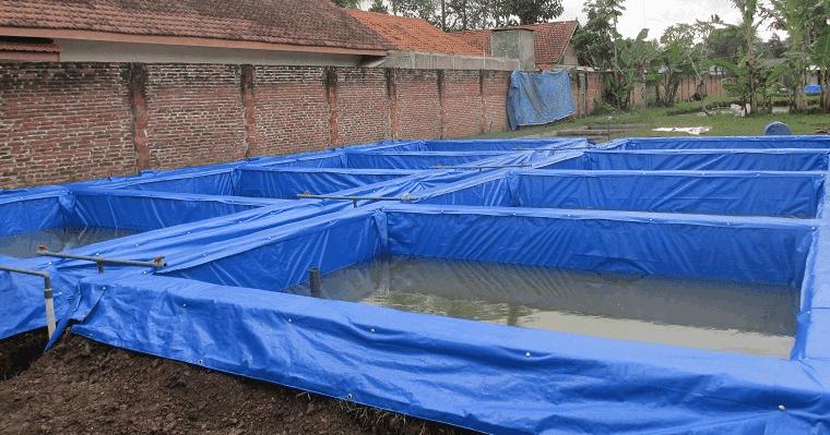 Cara budidaya ikan lele di kolam terpal - Artikel Terlengkap