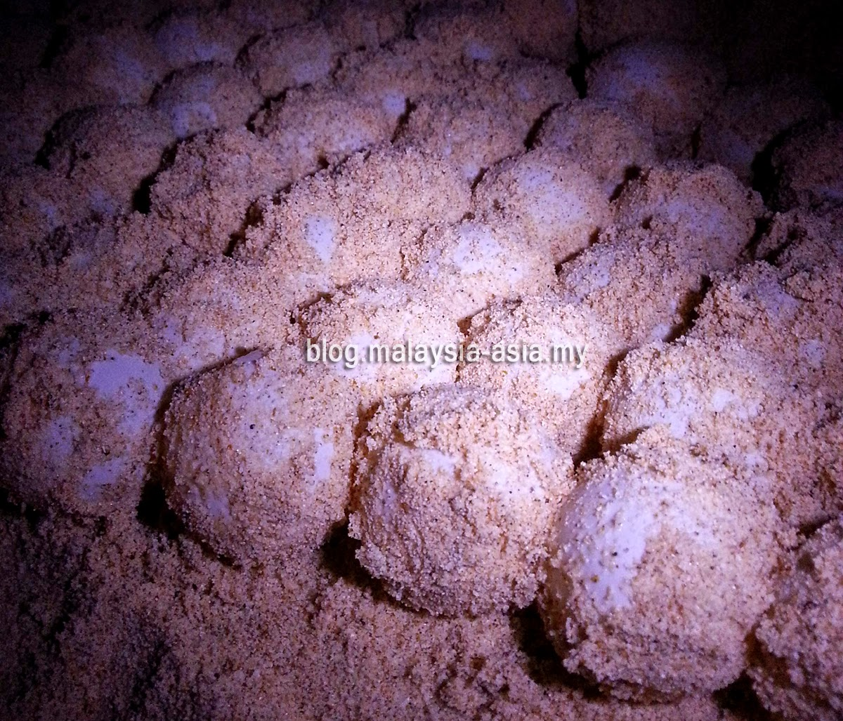 Turtle Eggs Photo
