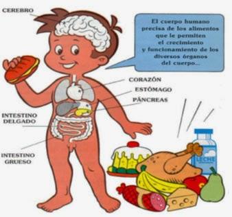 La Nutrición del ser humano : ¡No hay que olvidar!