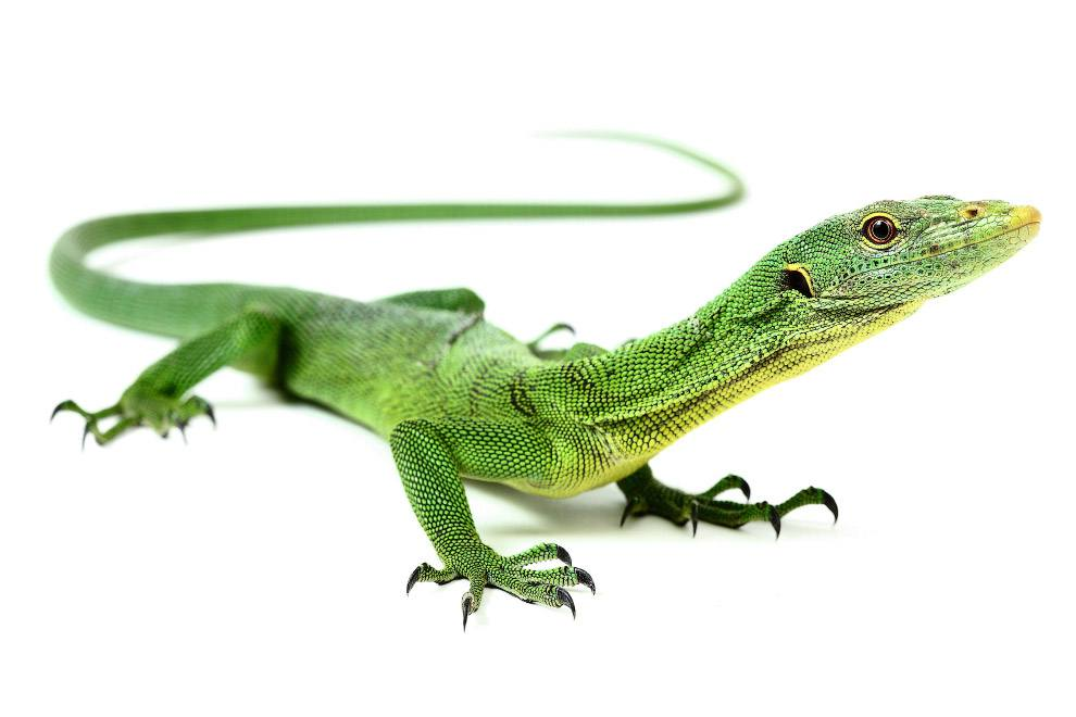 Wonderfully Cute Reptiles Pictures by Michael Leger