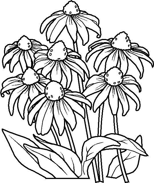 Planse De Colorat Cu Flori 8 Martie