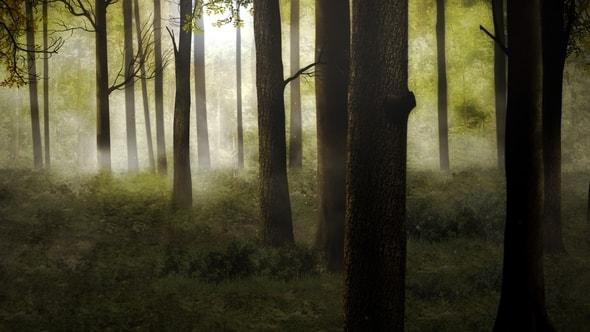 لقطات للمونتاج - مشهد الغابة في الصباح HD