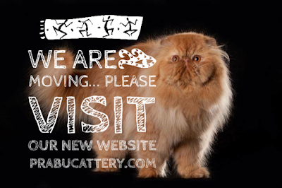 prabucattery.com