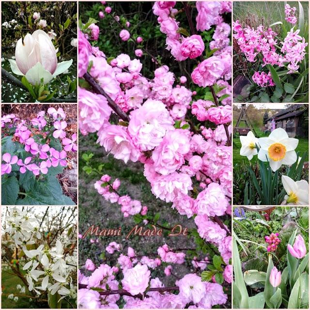 Frühlingsblüten - Spring Blossoms 2018