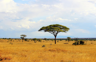 African savannah landscape in Tsavo Park, Kenya. (Credit: Maciej Czekajewski / Alamy Stock Photo) Click to Enlarge.