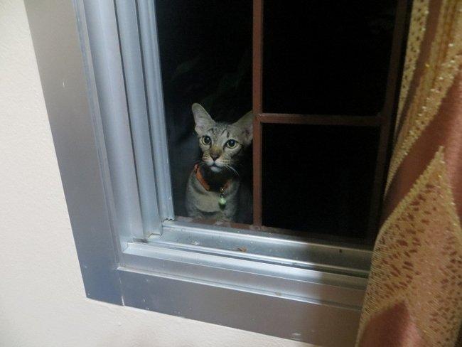 Кот смотрит в окно с улицы