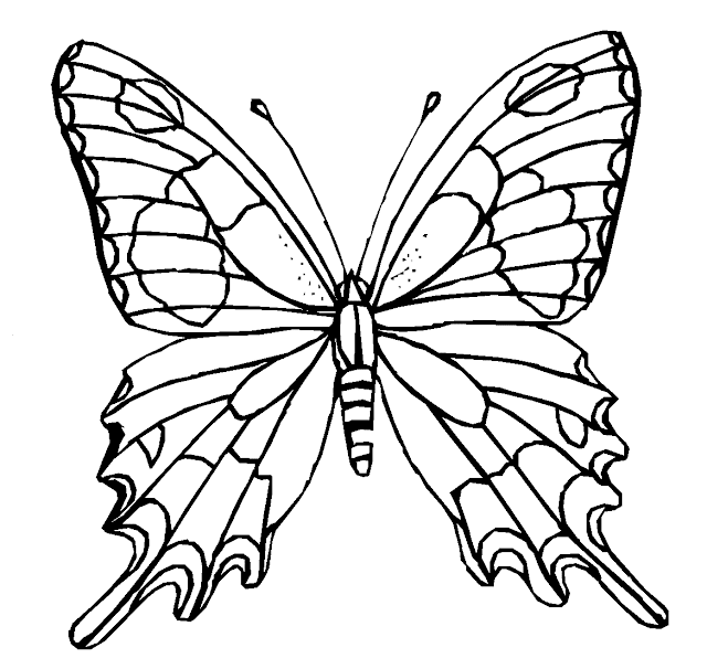 Butterfly Coloring Drawing Free wallpaper