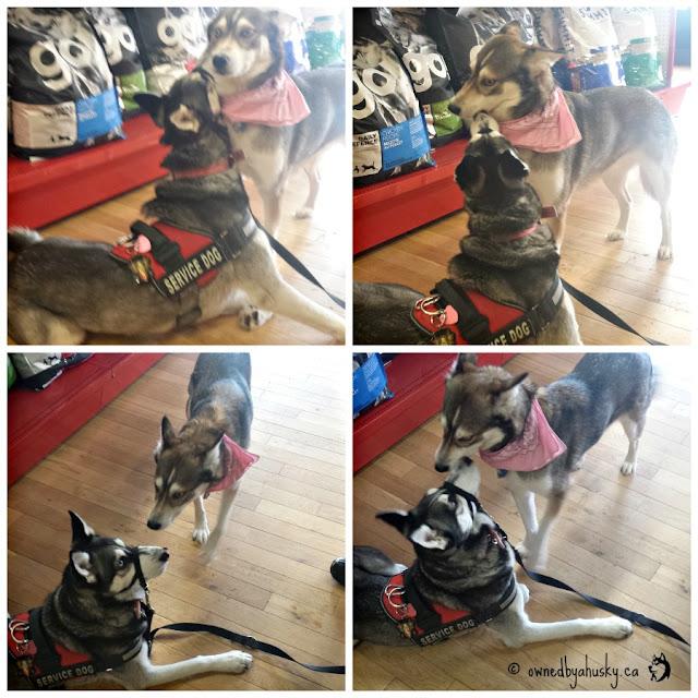 Smiths Falls Pet Store