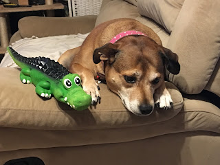 Image: Sad dog, with toy crocodile leaning over arm of lounge.