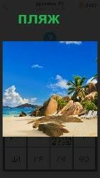 берег моря и пальма, камни под палящим солнцем