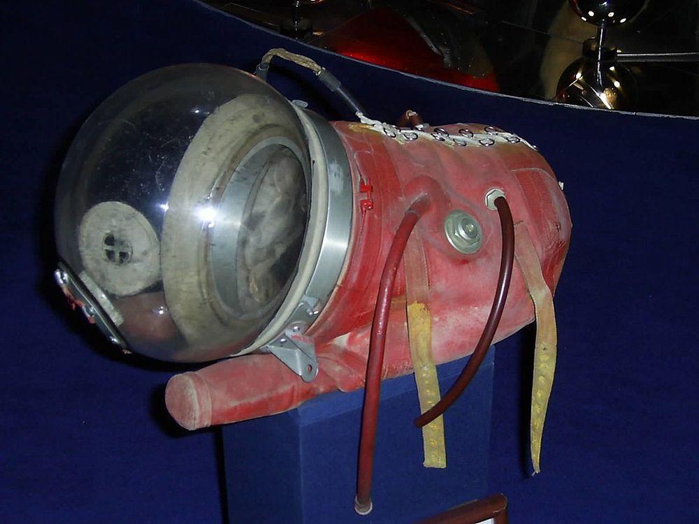 The original spacesuit that Laika wore into space.
