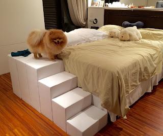 escadas especiais para cães lulu da pomerânia