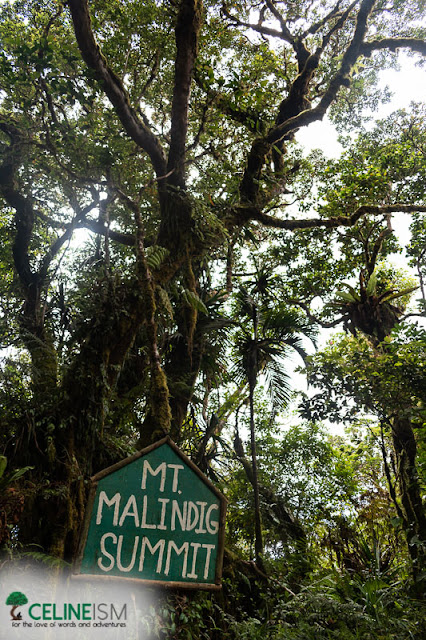 mt malindig forest