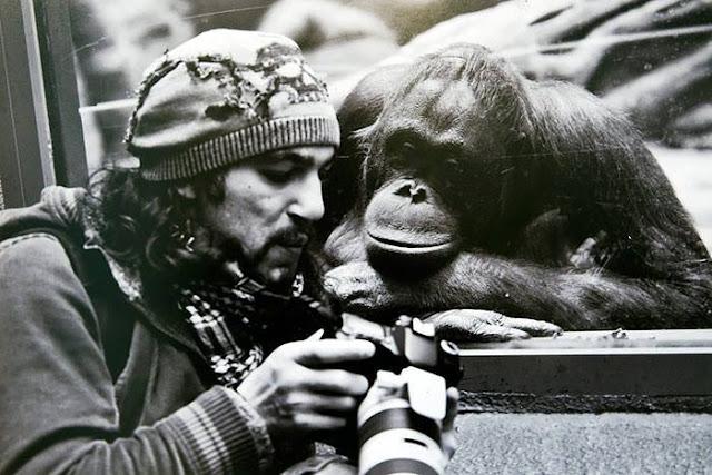 Crazy Photographers Shows Photo to Monkey