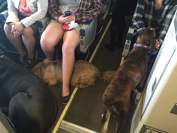 Airlines Break Their Own Rules So Pets Can Escape Fires - Massive wildfires in Fort McMurray made it difficult to get their pets to safety, too