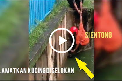 VIRAL Video Mengharukan, Penyelamatan Seekor Kucing Dari Dalam Selokan