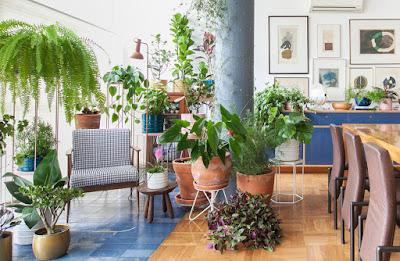 Plantas  em qualquer ambiente